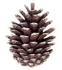 nutty-fun-pinecone1