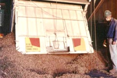 7. The peanuts are then taken by truck to the Peanut Company of Australia factory in Kingaroy for processing